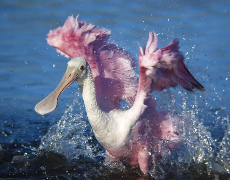 """Tara Tanaka: """"Wirklich gute Fotos von Vögeln oder anderen Tieren in Bewegung sollten etwas zeigen, das bei einem still sitzenden, unbeweglichen Objekt nicht zu erkennen wäre."""" // 1/800 s / ISO 100 / Panasonic G1"""