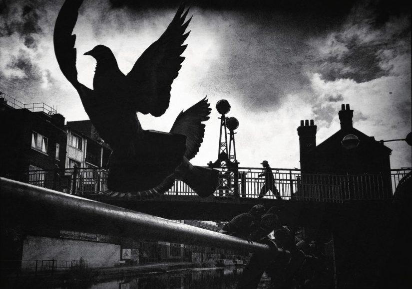 """""""Ich war an einem Sonntag im Westen Londons unterwegs, um mir ein bisschen die Füße zu vertreten"""", berichtet Bredun Edwards. """"Ein Spaziergang ohne festes Ziel."""" Da sah der gebürtige Australier plötzlich den Mann im Hintergrund die Brücke überqueren – sein fotografisches Auge zuckte. """"Ich wollte seine großen Schritte zeigen und mit seiner Hilfe dem Flug der Tauben im Vordergrund mehr Spannung verleihen. Dank der Kamine im Hintergrund bekommt der Betrachter auch noch einen Hinweis auf London als Location."""""""