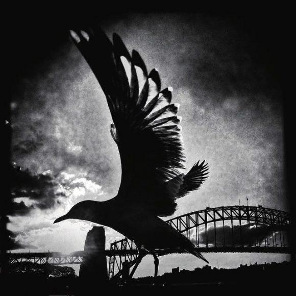 """Die Möwe hebt ab, als Edwards sich gerade möglichst nah an sie herangearbeitet hatte. """"Ich war gerade in Sydney angekommen, um meine Familie zu sehen, und hatte das Bedürfnis die berühmte Hafenbrücke zu fotografieren. Doch der Start der Möwe macht das Bild erst richtig gut."""""""