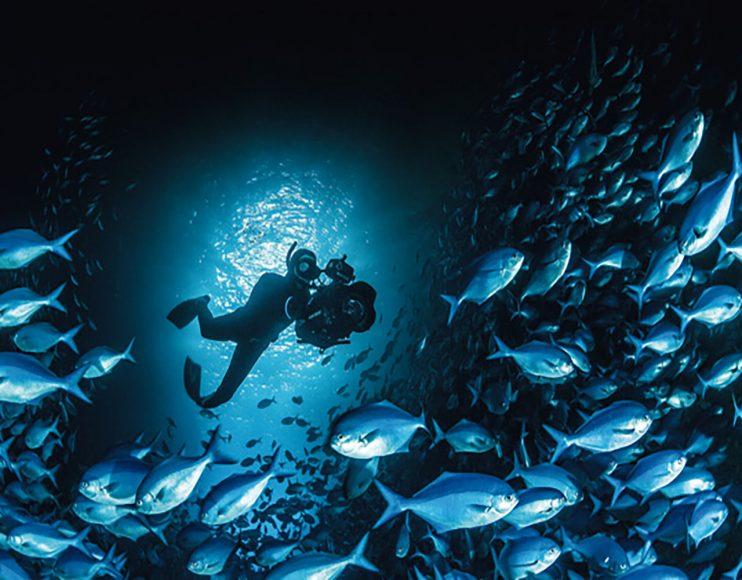 Moderne DSLRs im passenden Unterwassergehäuse eignen sich im nassen Element ebenso gut für bewegte Bilder wie an Land.