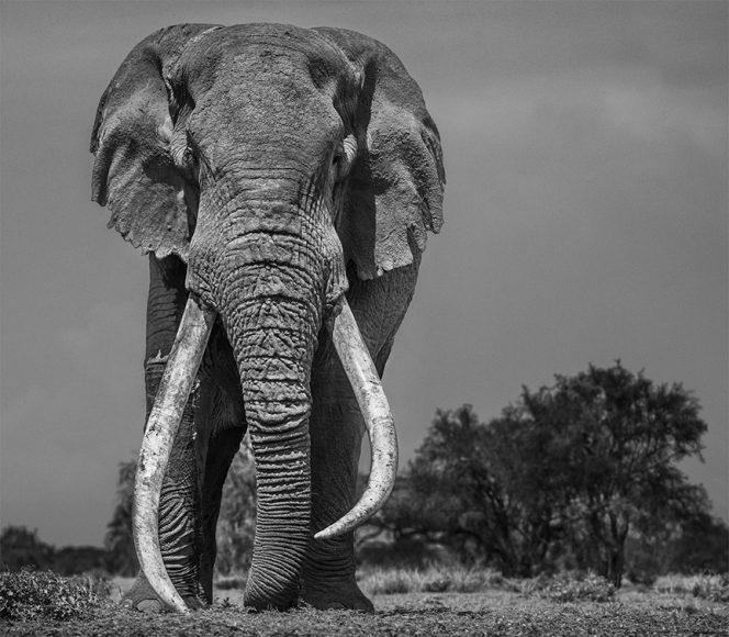 Colossus. Aufnahme mit Nikon D850 / 1/1250 s / Blende 8 200 mm / ISO 200 / AF-S NIKKOR 200 mm 1:2 G ED VR II © David Yarrow