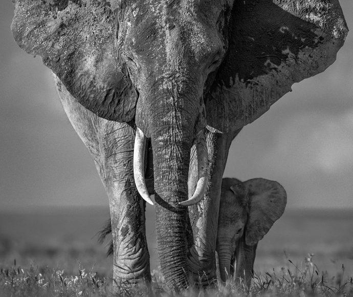 The Walk of Life (Der Lauf des Lebens). Aufnahme mit Nikon D850 / 1/1600 s / Blende 5 400 mm / ISO 160 / AF-S NIKKOR 400 mm 1:2,8 G ED VR © David Yarrow