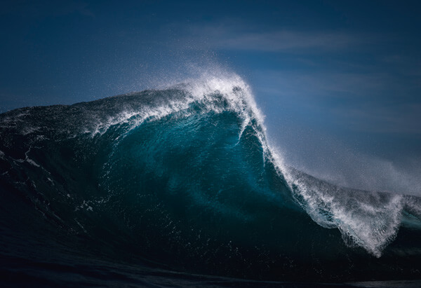 Fang © Ray Collins