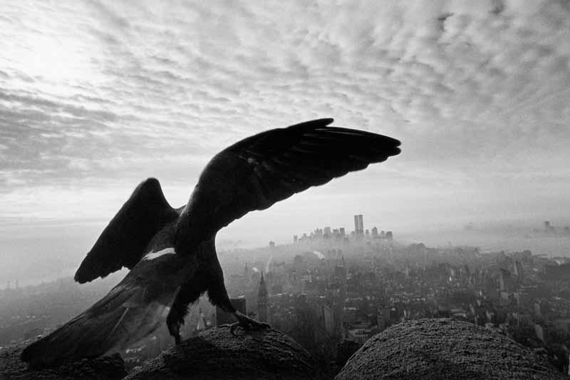 Frieder Blickle Manhattan, 1995 © Frieder Blickle