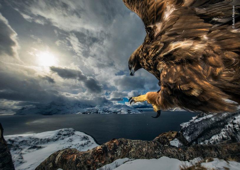 Siegerbild zur Kategorie Verhalten der Vögel von Audun Rikardsen (Norwegen).