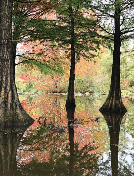 Im Arboretum in Ellerhoop haben wir die herbstlichen Farben eingefangen. Hier punktet die EOS M6 II durch ihre einfache Bedienung im Liveview.