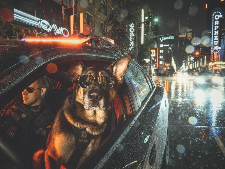 ©ADAMANDKEV VPD Caninie Brando