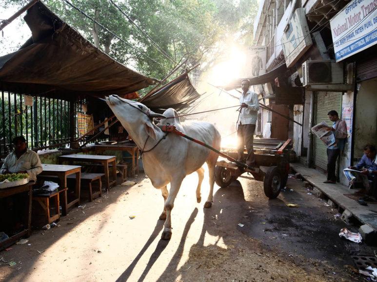 © Joe Hahn & Kai Stuht: Um die überfüllten Straßen zu vermeiden, greifen viele Stadtbewohner auf altertümliche Fortbewegungsmittel zurück. Alltag in Delhi.