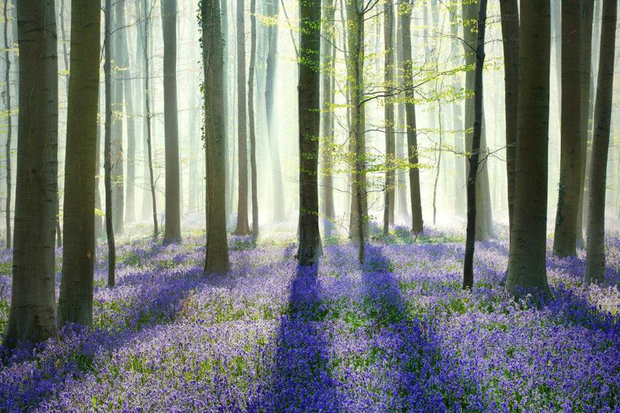 Waldwelten ©Kilian Schoenberger