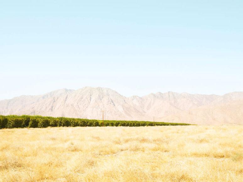 © Henrik Spohler Grapefruit-Anbau im Borrego Valley, USA.