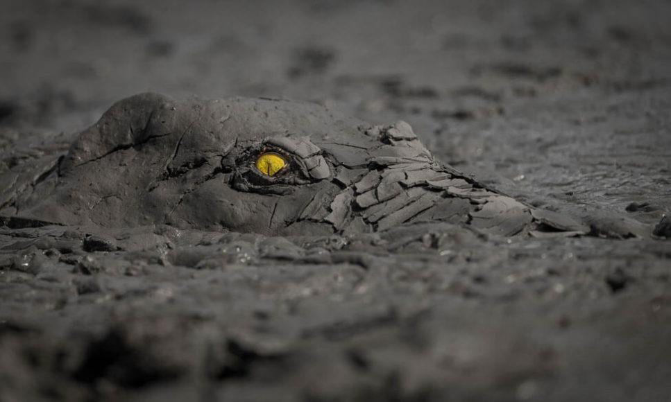 SIEGER   ANDERE TIERE  © Jens Cullmann - Danger in the mud  Krokodil in einem Schlammbecken