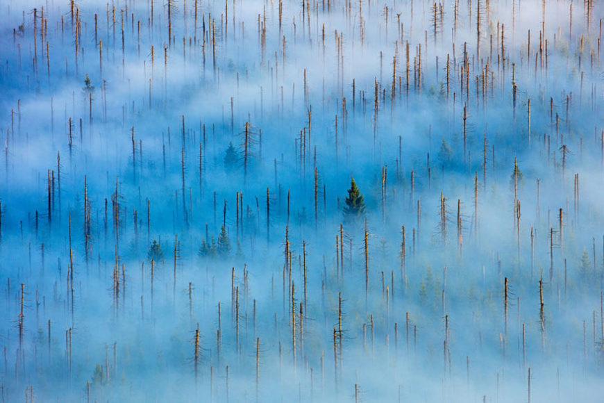 SIEGER   PFLANZEN UND PILZE  © Radomir Jakubowski - Leben im toten Wald Toter Wald, Bayern