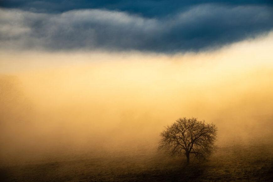 SIEGER   LANDSCHAFTEN  © Benjain Waldmann - Magisches Licht  Baum im Nebel am Albtrauf