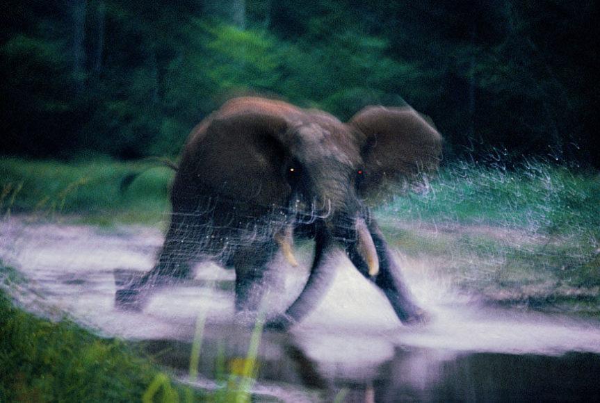 """Charging Elephant"", Dzanga Bai, Central African Republic 1993, © Michael Nichols / Edition Lammerhuber"