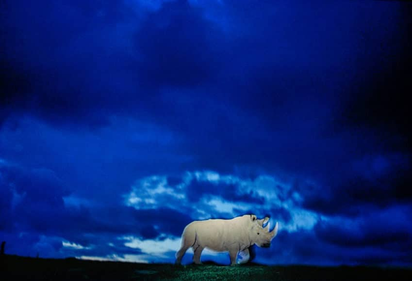 The Last Rhino, San Diego Wild Animal Park, California 1992, © Michael Nichols / Edition Lammerhuber