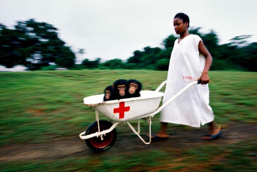 Hepatitis Study, Liberia 1989, © Michael Nichols / Edition Lammerhuber