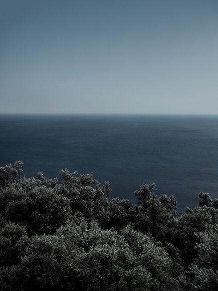 © Sandro Diener, Olivenwald, Griechenland, 2019