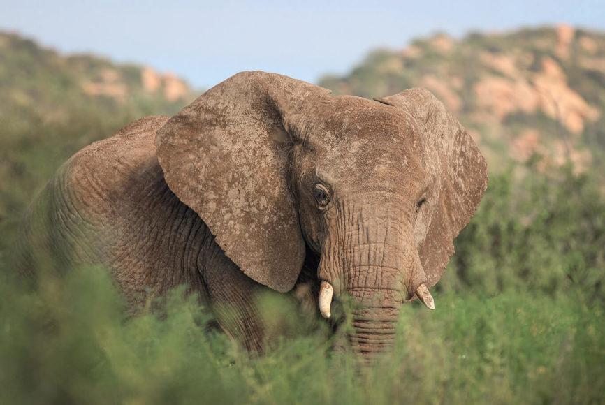 © Manuel Ketterer, Die sanften Riesen prägen das europäische Verständnis von Afrika. Doch bei einer guten Safari sind sie nicht die einzigen Begegnungen.