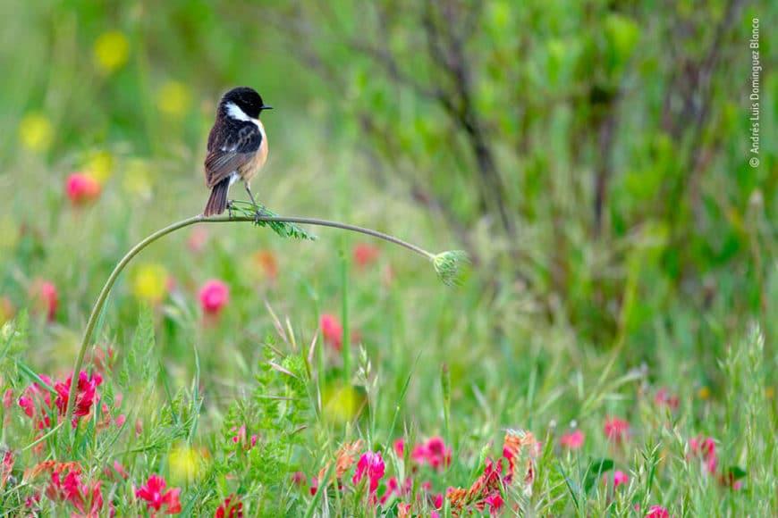"""Junge Naturfotograf*innen - 10 Jahre und jünger: © Andrés Luis Dominguez Blanco (Spanien) """"Perfekt ausgewogen"""""""
