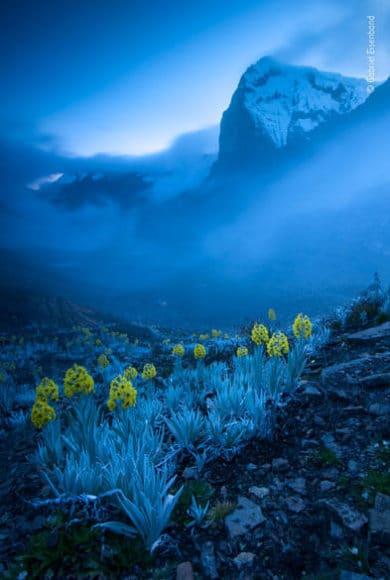 """Das Reich der Pflanzen und Pilze: © Gabriel Eisenband (Kolumbien) """"Komposition in Blau und Gelb"""""""