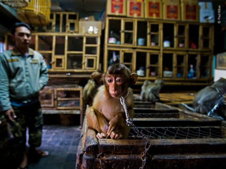 """Naturfotojournalist des Jahres - Portfoliopreis:  © Paul Hilton (Großbritannien, Australien)  """"Hinterzimmergeschäft"""" aus der Reportage """"Missbrauch zur Unter-haltung"""""""