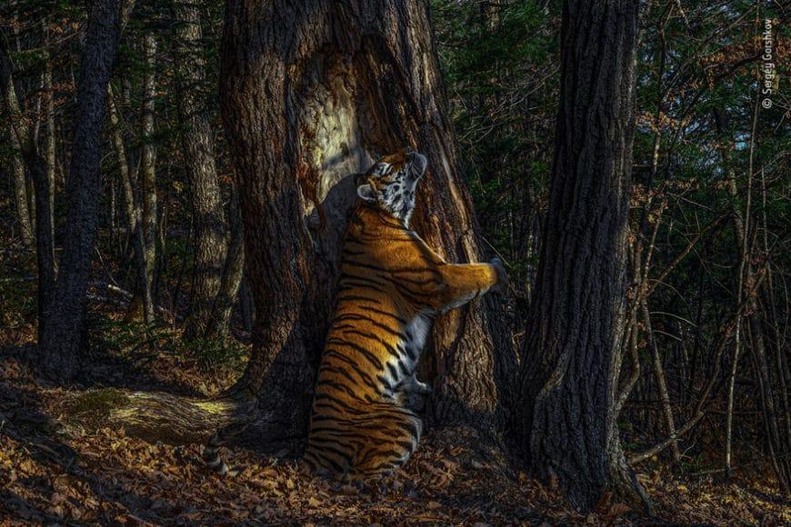 """Naturfotograf des Jahres: © Sergey Gorshkov (Russland) Titel des Bildes: """"Die Umarmung"""""""