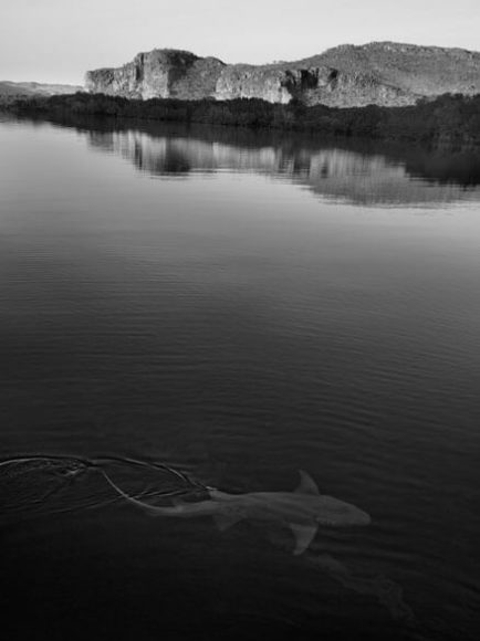 © RUSSELL JAMES, SHARK AND LANDSCAPE, 2019