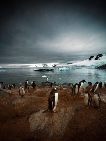 "© Sebastian Copeland | ""Antarctica: The Waking Giant"" 