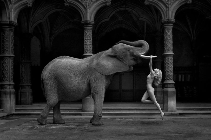 © Marc Lagrange - Tusk - 2015 - courtesy Echo Fine Arts