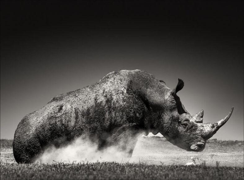 © Joachim Schmeisser, Rise.