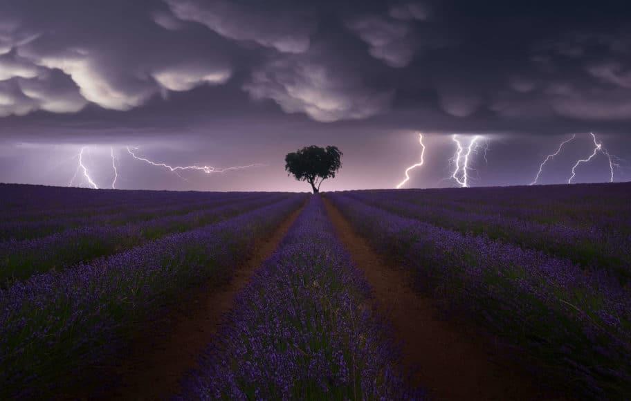 Electric Storm on Lavender. © Juan López Ruiz, Spain, Category Winner, Open, Landscape, 2021 Sony World Photography Awards.