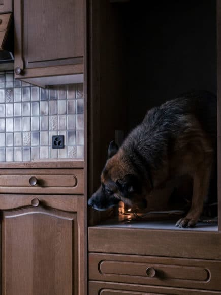 Canine unit's dog looking for drugs, aus der Serie How to Secure a Country, 2014-