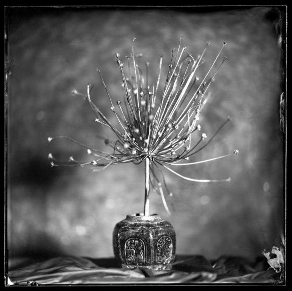 """Der Sieger in der Kategorie Still Life, Peter Eleveld, hegt eine besonderer fotografische Liebe: """"Für dieses Projekt habe ich gewöhnliche Gegenstände wie Glaswaren, Früchte und Blumen verwendet und die Nassplatten-Kollodionstechnik angewendet, um sie in etwas Außergewöhnliches zu verwandeln. Als ich mein Motiv gefunden hatte, begann ich mir vorzustellen, wie es gedruckt aussehen würde. Dieser spezielle Prozess erfordert viel Geduld und sorgfältige Planung der Komposition, Beleuchtung und Belichtungszeiten. Die harte Arbeit zahlt sich aus, wenn endlich alles in einem einzigartigen, magischen Moment zusammenkommt, während Sie beobachten, wie sich das Foto langsam vor Ihren Augen entwickelt. Dieser Moment passiert nicht immer, aber wenn dies der Fall ist, bleibt Ihnen ein einzigartiges Bild (Platte).""""  © Peter Eleveld, Netherlands, Winner, Professional, Still Life, 2021 Sony World Photography Awards"""