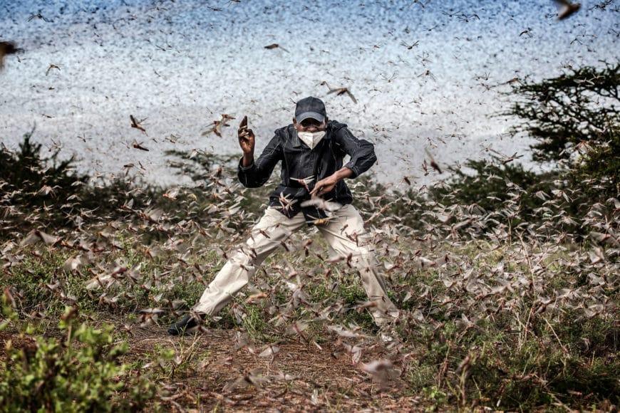 Es gibt Geschichten, die nicht im globalen Bewusstsein verankert sind. Luis Tato erzählt in seiner Bilderserie von einer: Wüstenheuschrecken sind die zerstörerischsten Zugschädlinge der Welt. Milliarden von ihnen ernähren sich unter feuchten Bedingungen in semi-ariden bis ariden Umgebungen in ganz Ostafrika, verschlingen alles auf ihrem Weg und stellen eine enorme Bedrohung für die Nahrungsmittelversorgung und den Lebensunterhalt von Millionen von Menschen dar. Landwirte stehen bereit, während Armeen gefräßiger Insekten ihre Ernte fressen. In der Zwischenzeit beobachten die Hirten, wie die Landschaften entblößt werden, bevor ihr Vieh sie erreichen kann. Extreme Niederschlagsereignisse und Unwetteranomalien haben ideale Bedingungen für die Verbreitung von Heuschrecken geschaffen. Schwärme von Wüstenheuschrecken von der Arabischen Halbinsel tobten Anfang 2020 in Ostafrika und verschlangen Ernte und Vegetation. Die Krise erreichte historische Ausmaße. Zehn Länder am Großen Horn von Afrika und im Jemen waren befallen. Einige Gebiete Ostafrikas, wie Kenia, hatten seit mehr als 70 Jahren keine derart schweren Ausbrüche von Wüstenheuschrecken mehr gesehen. Covid-19-Beschränkungen haben die Bemühungen zur Bekämpfung des Befalls erheblich verlangsamt, da das Überschreiten von Grenzen schwieriger geworden ist, Verzögerungen verursacht und die Lieferketten von Pestiziden und Produkten unterbrochen wurden, die erforderlich sind, um zu verhindern, dass diese Schädlinge die Vegetation in der Region auslöschen und Millionen von Menschen dem Hunger aussetzen.  © Luis Tato, Spain, Winner, Professional, Wildlife & Nature, 2021 Sony World Photography Awards