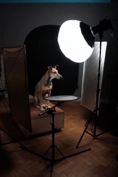 Tierisches Model im Studio vor der Blitzanlage.