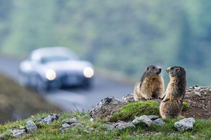 Straßen erschließen das Gebirge für den Massentourismus, wie etwa hier auf der Kaiser-Franz-Josefs-Höhe in Österreich. Um ein Foto mit einem Murmeltier zu ergattern, sind vielen Touristen fast alle Mittel recht. © Christine Sonvilla, Marc Graf/Knesebeck Verlag.