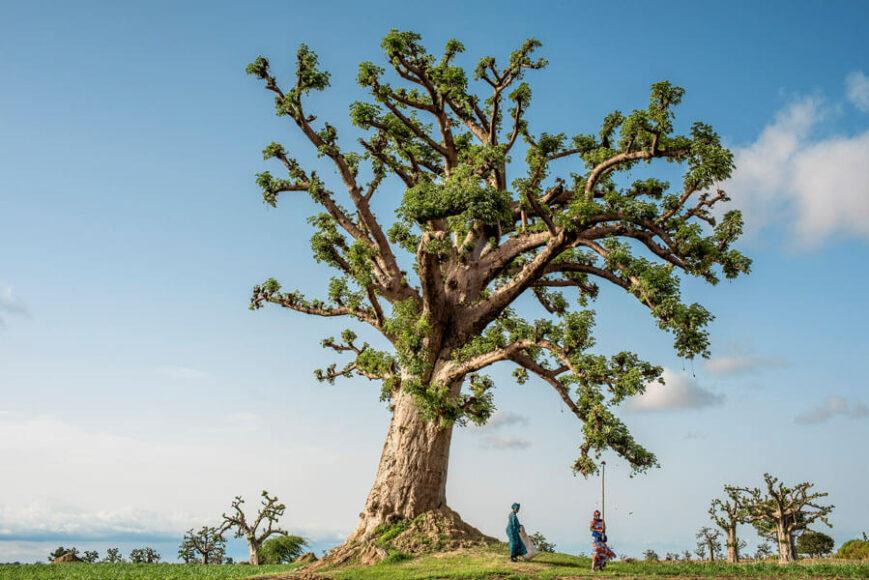 (Trees of the World) © Tomas Munita