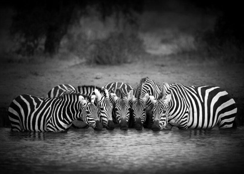 © Bjorn Persson, Masai Mara, Kenya / www.printsforwildlife.org.