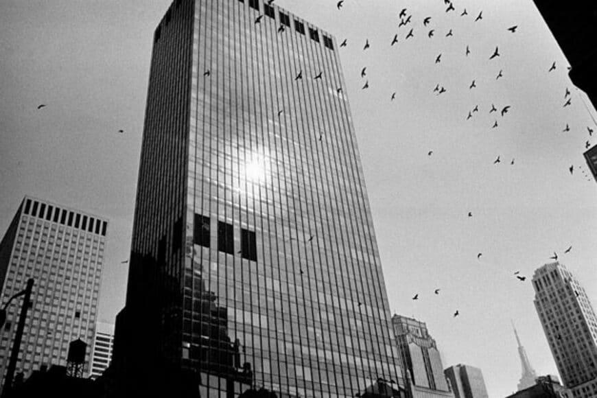 Joseph Rodriguez, TAXI Series, Birds over Midtown 1984, © Joseph Rodriguez, courtesy Galerie Bene Taschen.