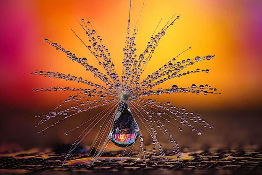 CEWE Photo Award Kategoriegewinner Natur: Pusteblumen-Schirmchen von Petra Jung.
