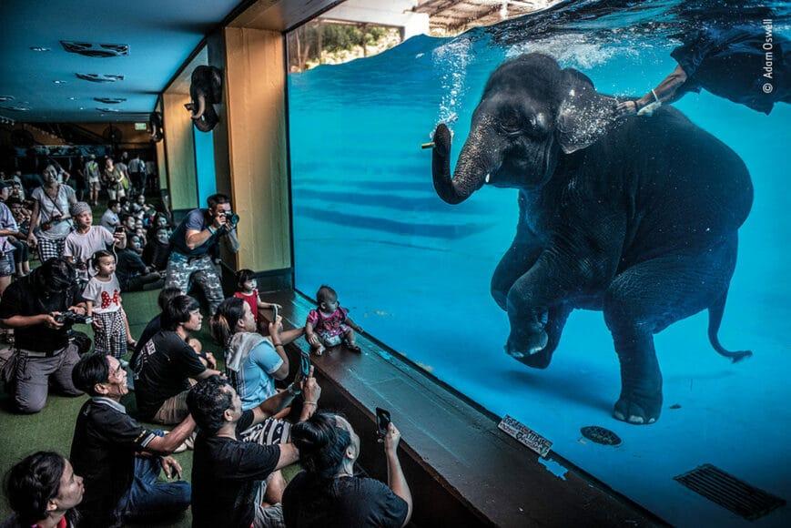 © Adam Oswell, Wildlife Photographer of the Year