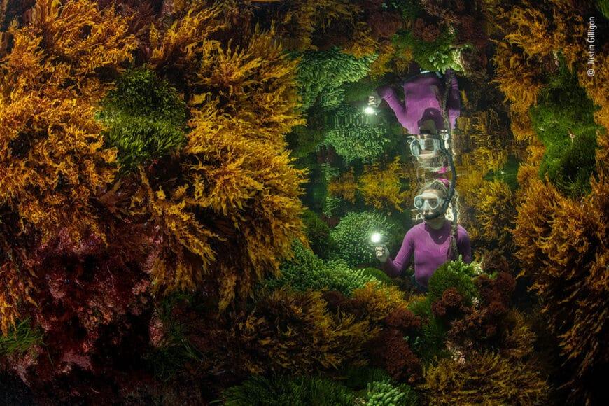 © Justin Gilligan, Wildlife Photographer of the Year