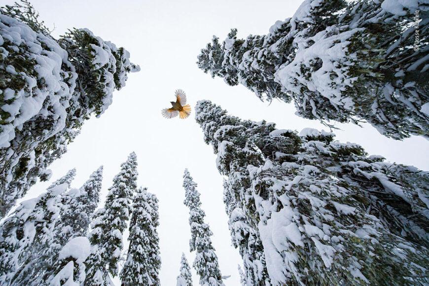 © Lasse Kurkela, Wildlife Photographer of the Year