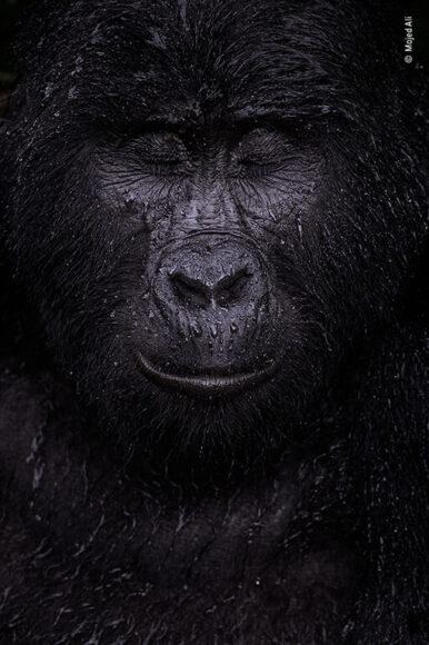 © Majed Ali, Wildlife Photographer of the Year