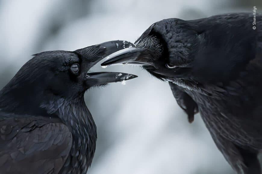 © Shane Kalyn, Wildlife Photographer of the Year