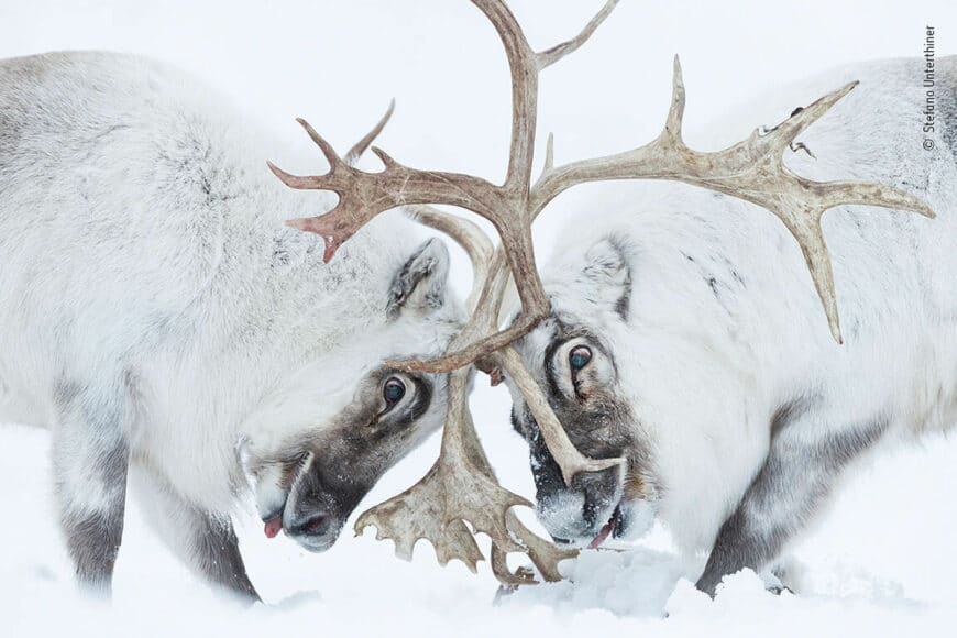 © Stefano Unterthiner, Wildlife Photographer of the Year