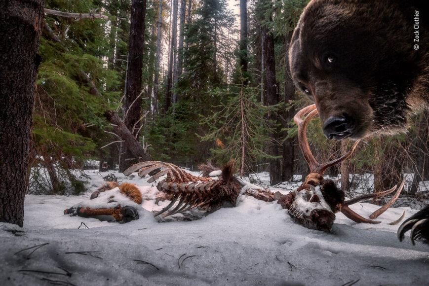 © Zack Clothier, Wildlife Photographer of the Year